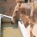 A-donkey's-leftover.jpg