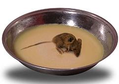 Butter-in-which-a-dead-rat-fell..jpg