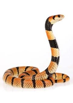 05_04_018-Snake.jpg