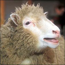 05_10_007-A-hornless-sheep.jpg