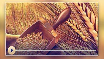 土地の生産物のザカート